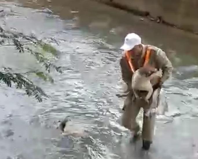 Guarda municipal resgata cachorro que caiu no Rio Maracanã