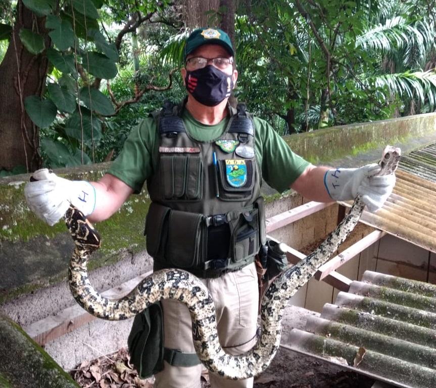Patrulha ambiental resgata duas jiboias em estabelecimentos comerciais da cidade
