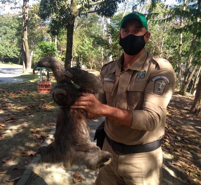 Patrulha ambiental resgata bicho-preguiça em praça da Ilha do Governador