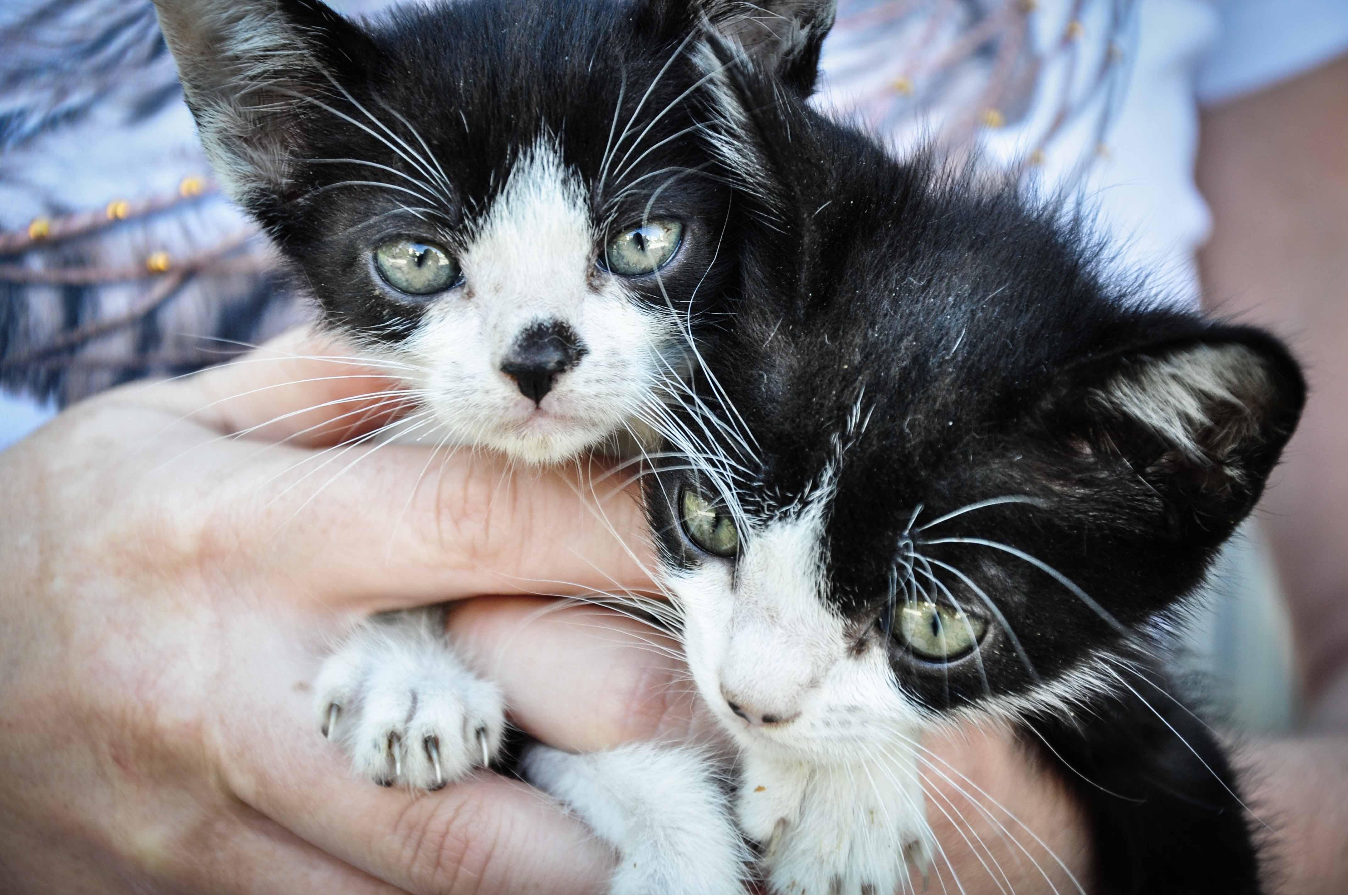 Castração de gatos inicia nova etapa de campanha sobre a esporotricose