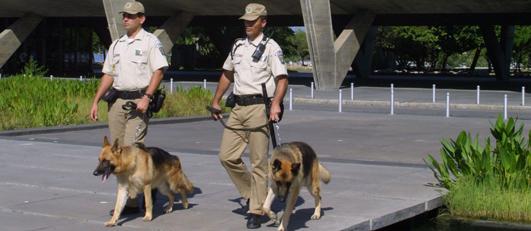 Os cães do Canil da GM-Rio complementam o patrulhamento nas ruas para garantir a ordem na cidade.