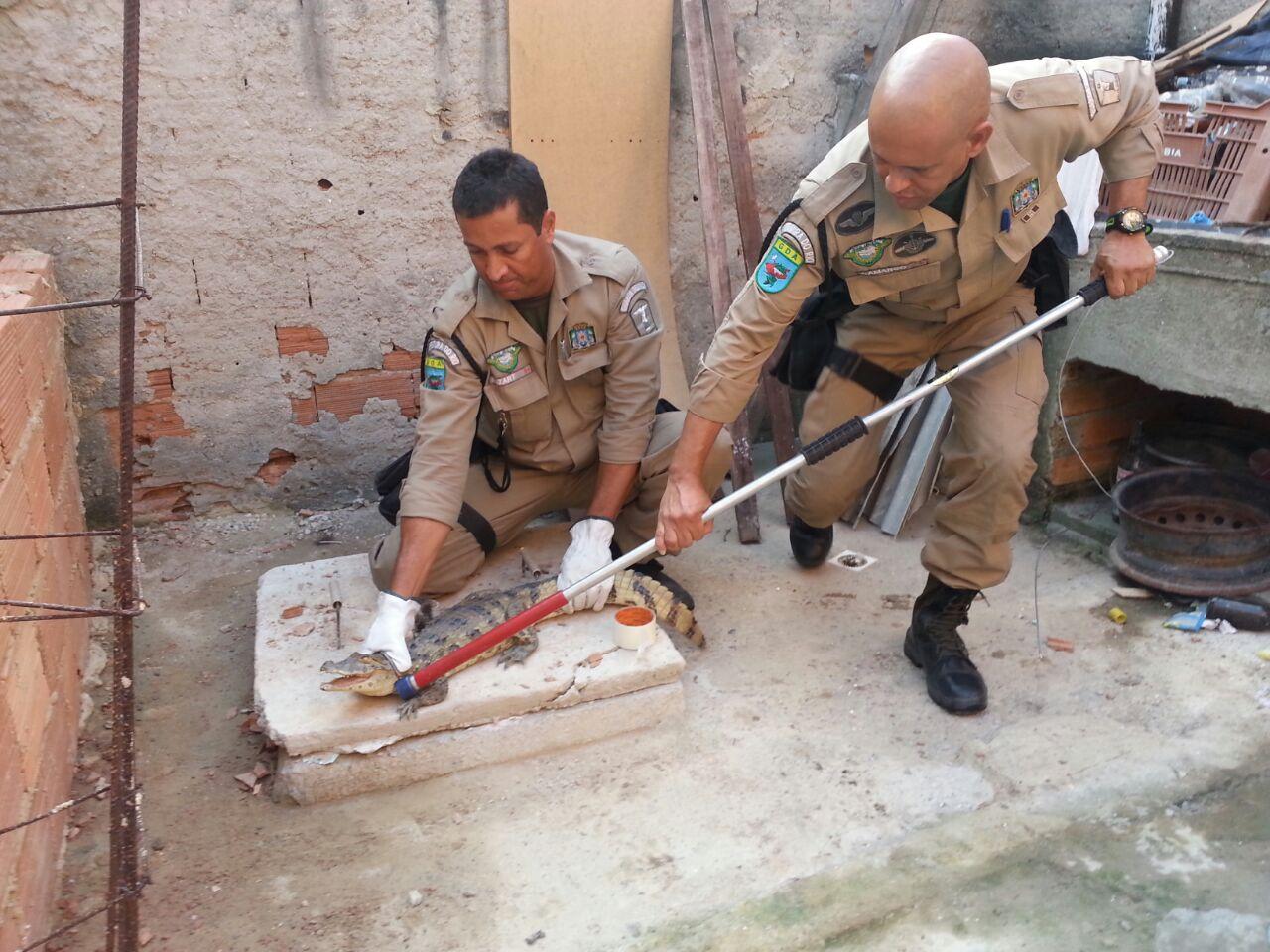 Guarda Municipal e Meio Ambiente resgatam  jacaré de papo-amarelo na Zona Oeste