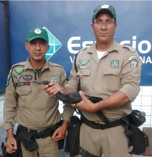 Patrulha Ambiental resgata ave marinha na Barra