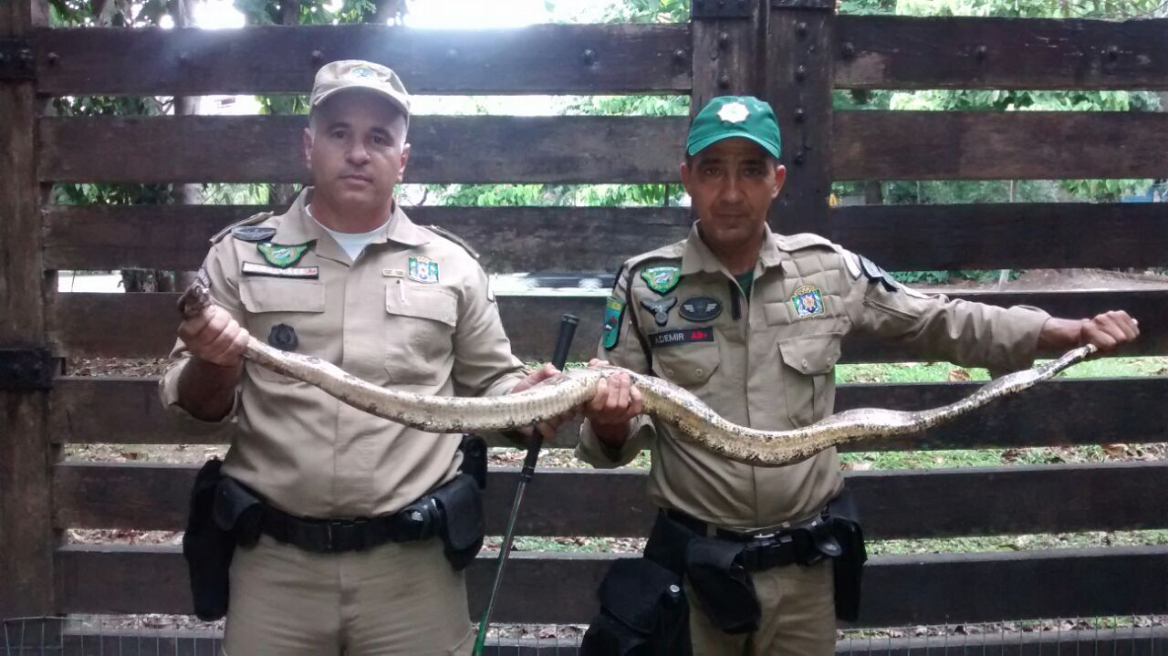 Patrulha Ambiental resgata três animais  silvestres nas Zonas Norte e Oeste da cidade