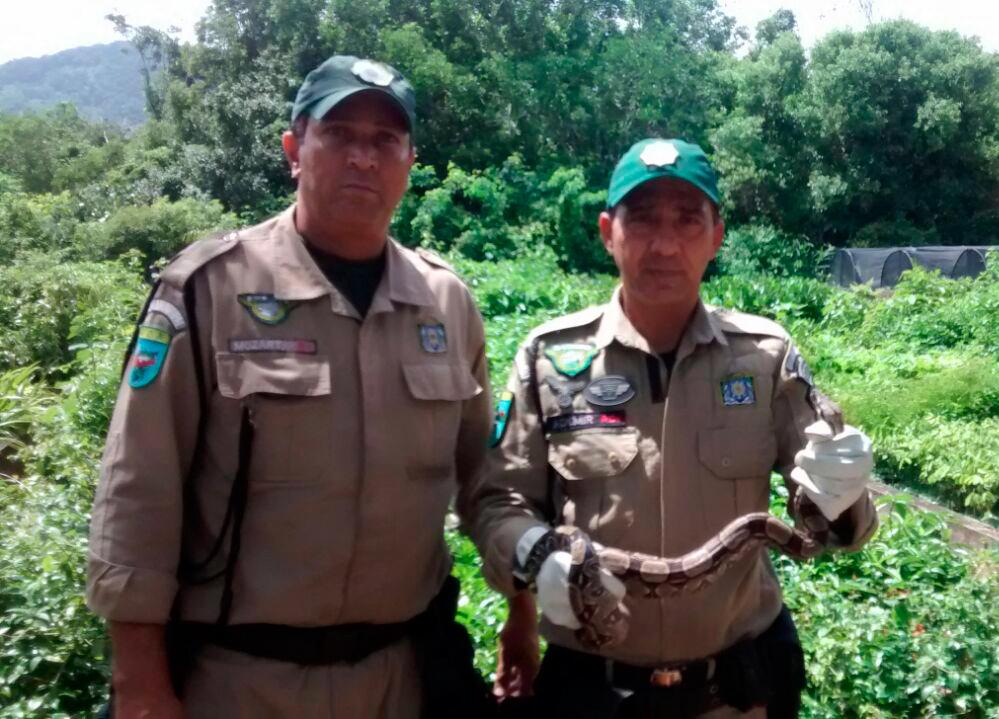Patrulha Ambiental resgata jiboia  e ouriço cacheiro na Freguesia