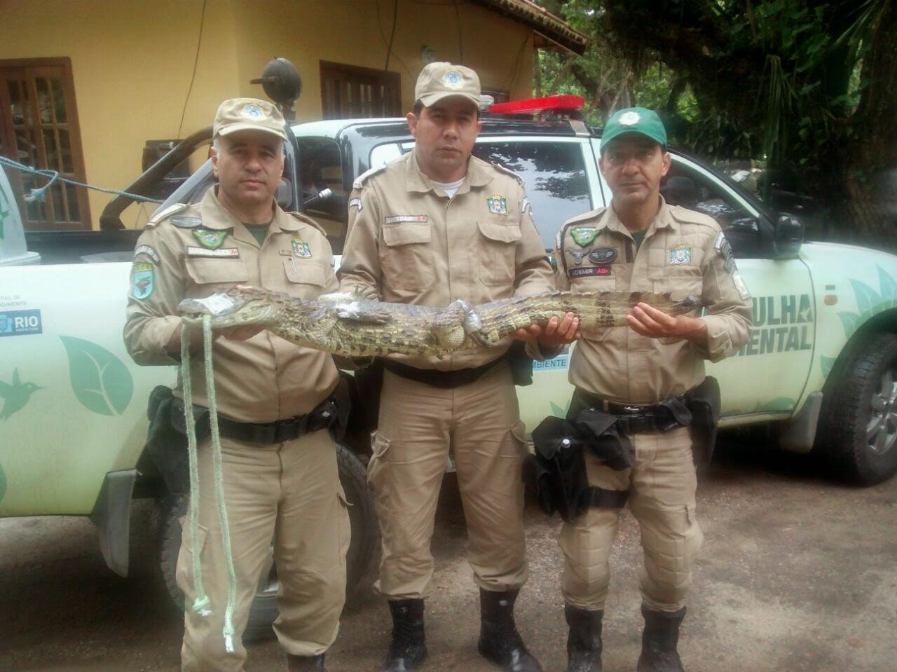 Patrulha Ambiental resgata jacaré de papo-amarelo  em escola do Exército, no bairro de Deodoro