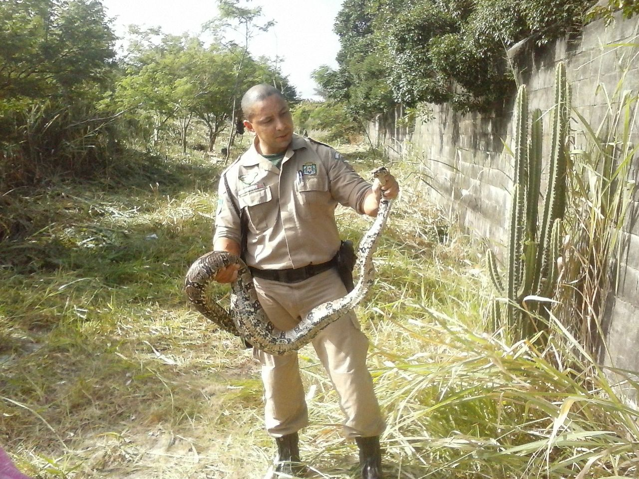 Guardas resgatam cobras na Zona Oeste