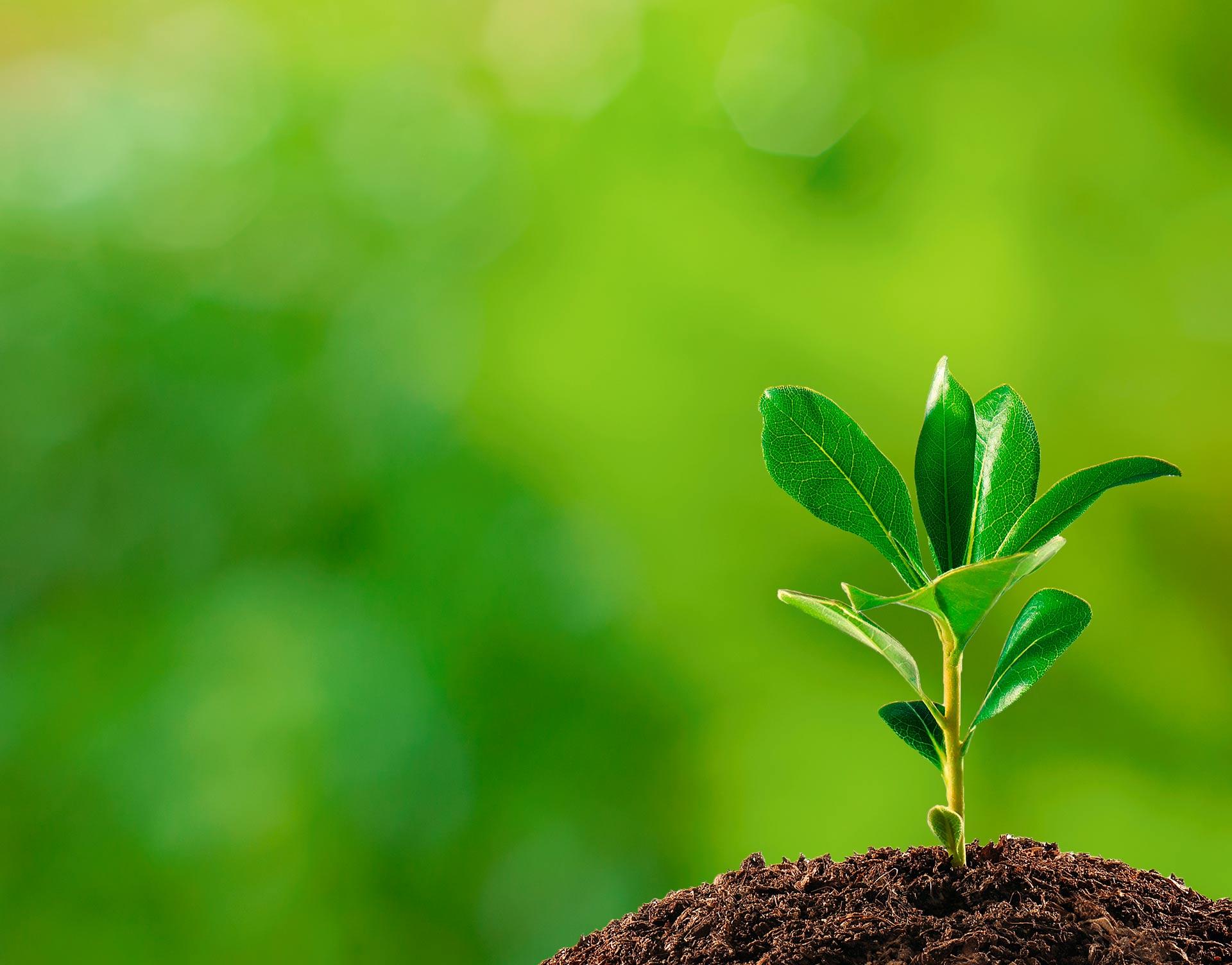Município promove exposição e atividades educativas em comemoração ao Dia Mundial do Meio Ambiente
