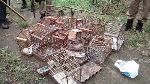 Patrulha Ambiental apreende pássaros silvestres em Bangu
