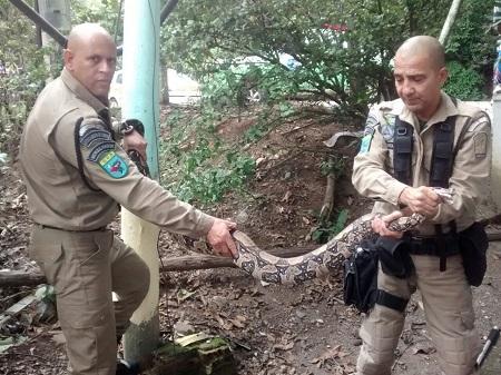 Guardas resgatam jiboia de mais de 2m  em área residencial no Itanhangá