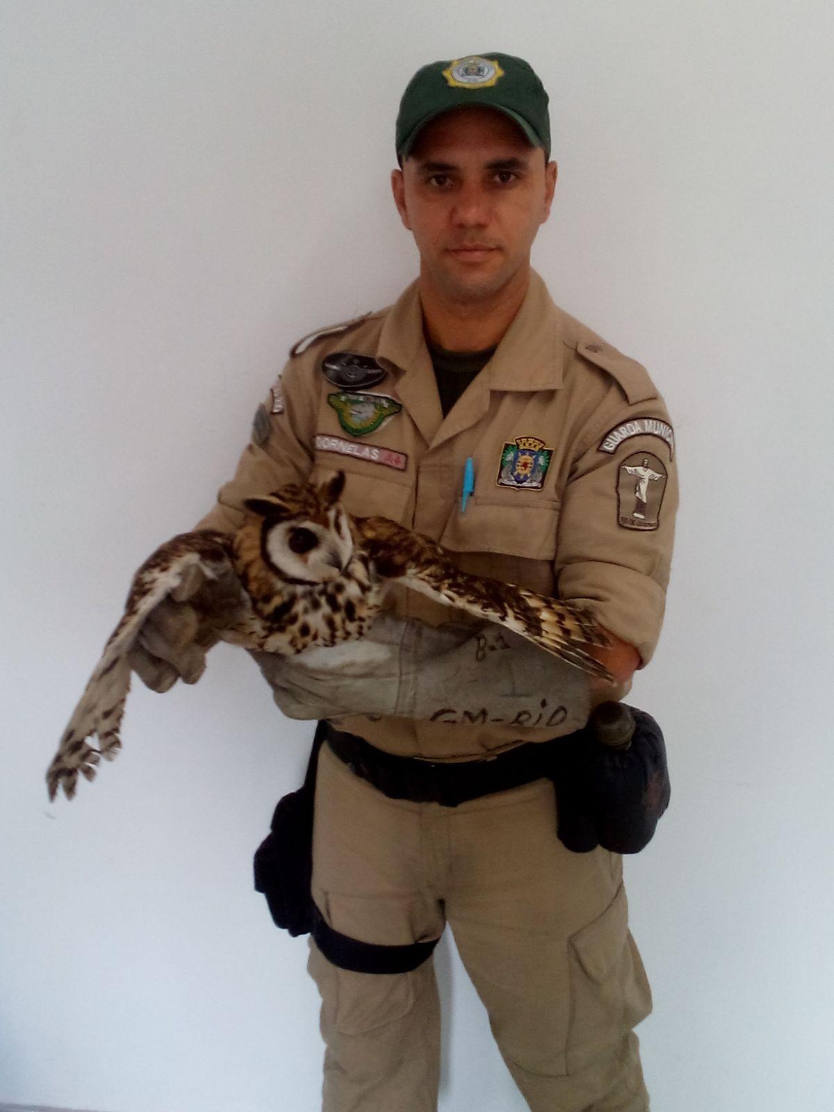 Patrulha Ambiental resgata coruja com ferida por linha de pipa na Zona Norte