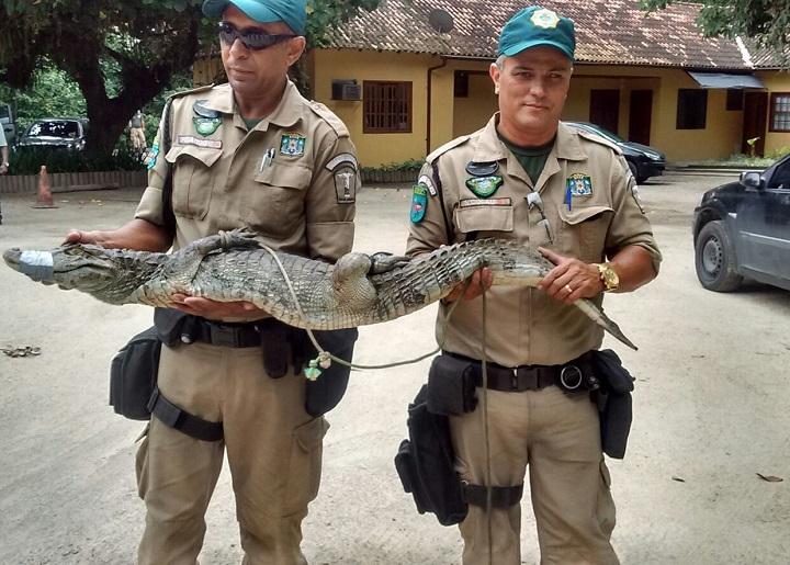 Patrulha Ambiental resgata jacaré no Itanhangá