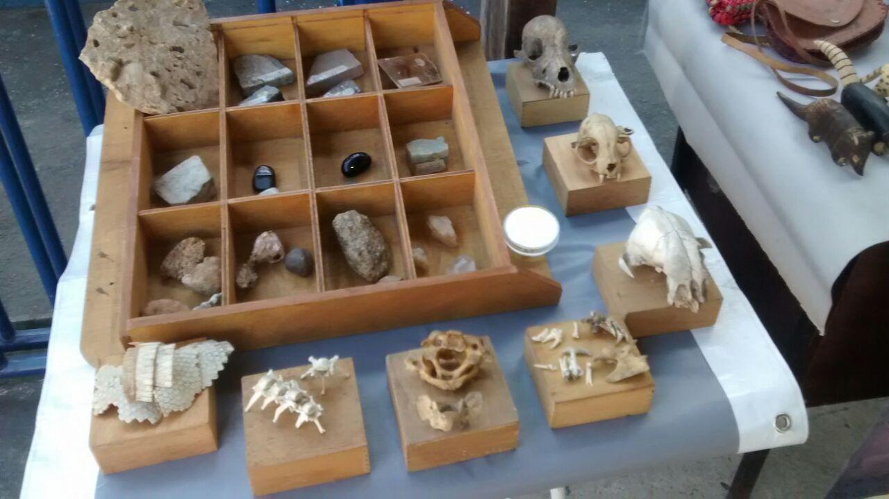 <strong>Museu Natural Itinerante expõe na 5ª SGCO, em Bangu</strong>