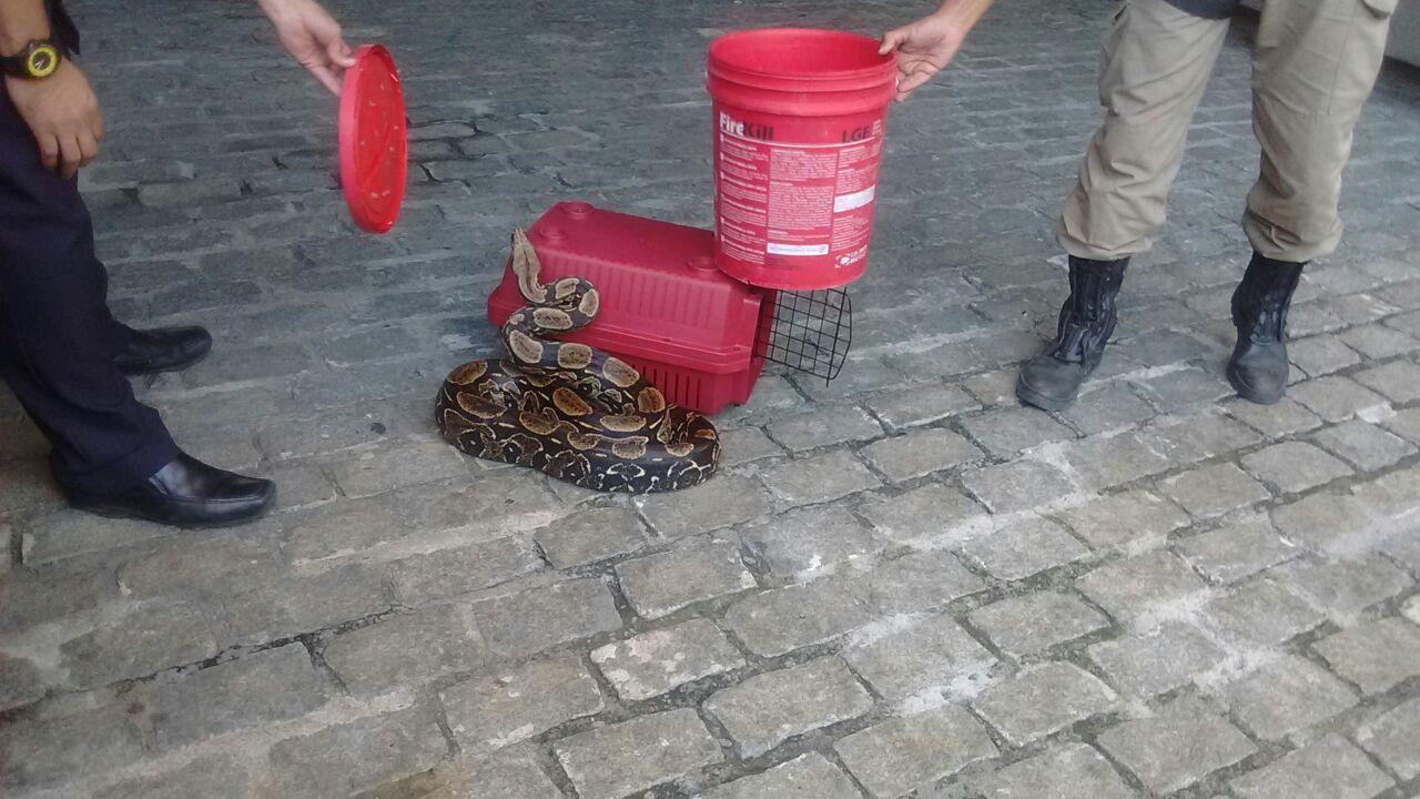Guarda Municipal resgata duas cobras na Gávea e na Prainha