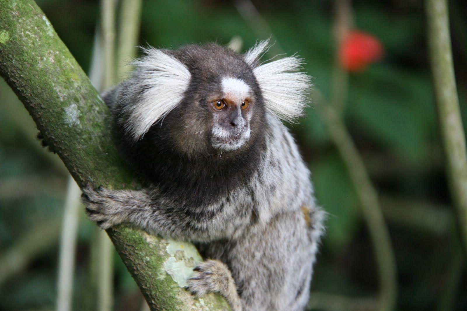 Nota de esclarecimento - Mortes de primatas no Rio de Janeiro