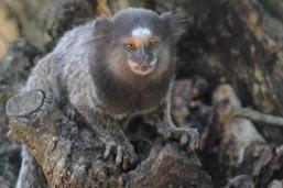 Prefeitura lança campanha para denúncias de macacos mortos