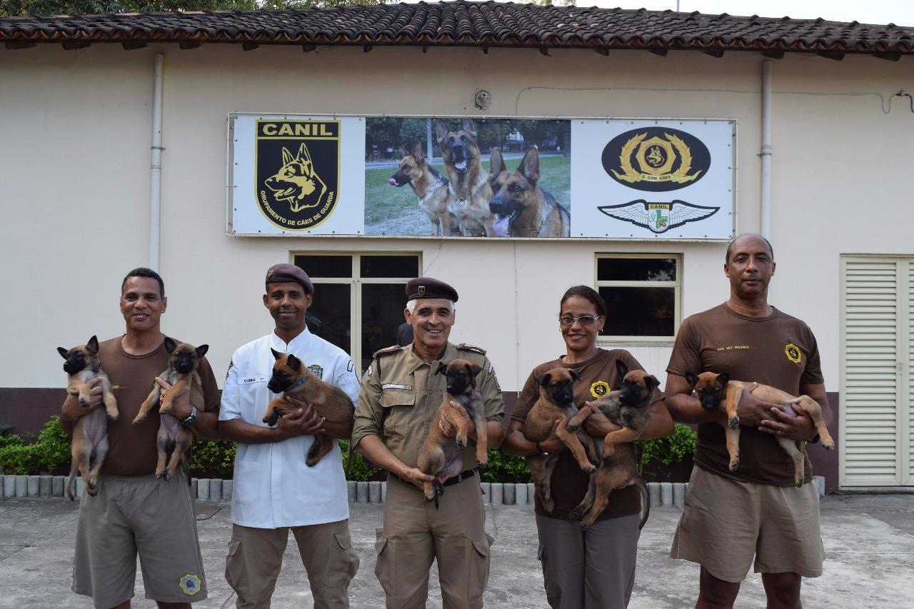 Guarda Municipal apresenta nova tropa canina e realiza enquete para escolha de nomes de dois cães