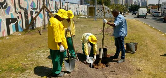 Fundação Parques e Jardins dá início ao plantio de 600 mudas em projeto de arborização na Barra