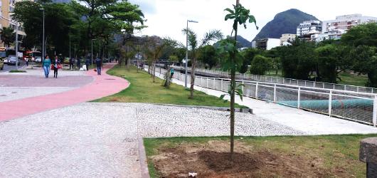 Fundação Parques e Jardins inicia plantio de mudas nativas na zona sul