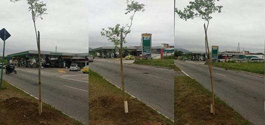 FPJ promove plantio de 300 mudas na Estrada da Posse, em Campo Grande