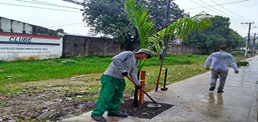 Fundação Parques e Jardins planta seis palmeiras imperiais em Santa Cruz