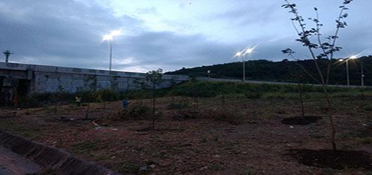 Trecho da Transolímpica recebe mais de 120 mudas em ação de plantio da Fundação Parques e Jardins