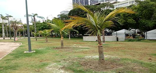 Fundação Parques e Jardins revitaliza Praça Nossa Senhora da Paz, em Ipanema