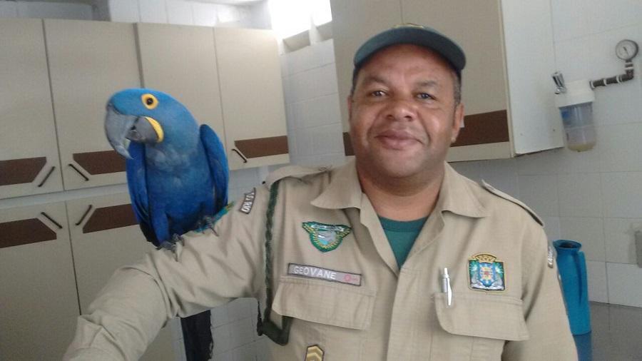 Patrulha Ambiental resgata arara azul no Lins de Vasconcelos