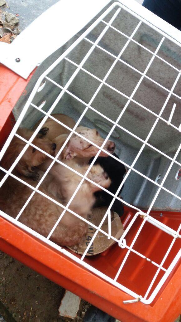 Animais são resgatados de acumuladora na Zona Norte do Rio