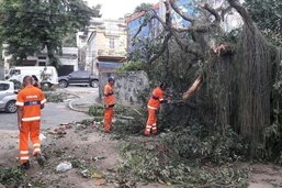 Comlurb remove 47% de árvores e 1.600 toneladas de resíduos após temporal