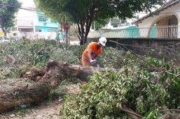 Comlurb remove mais de 60% de árvores e mais de mil toneladas de resíduos