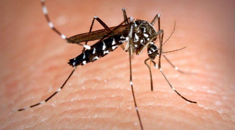 Dengue: Rio quer ser exemplo de combate ao mosquito. Saiba mais