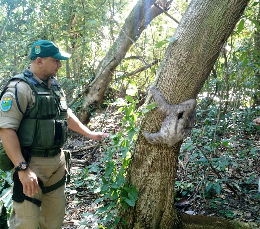 Patrulha Ambiental resgata preguiça em via do Recreio dos Bandeirantes