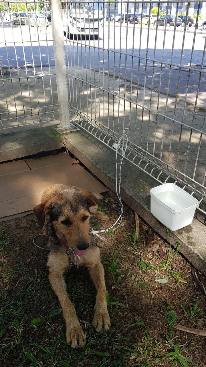 Guardas municipais buscam lar para cadela abandonada no Leblon