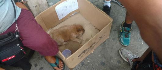 GM resgata filhote de Chow-chow vítima de maus tratos em Copacabana